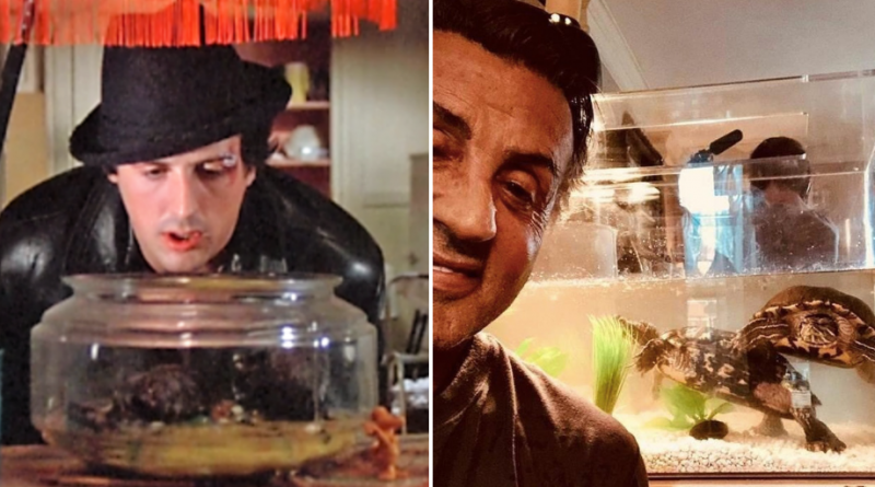 Rocky | Sylvester Stallone revela que manteve as tartarugas do filme